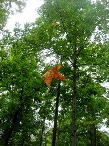falling-leaf