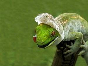 lizard-shedding-skin-wallpaper